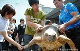 108斤大海龜誤入漁網,被漁民救起放生,它的一個舉動催人淚下