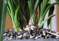 別人的蘭花養再好,也不是你的,記住這3個技巧,也能開花冒白根