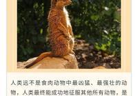 布魯納:人類最終成功地征服其他動物,是因為具有理智和智慧