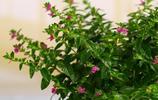 同事來我家串門,看到陽臺的植物,直呼太美了,稱要多買幾盆