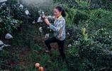 村婦獨自帶娃種石榴,夢想花百萬買豪車,自蓋多套樓房