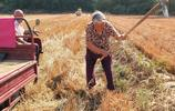 炎炎烈日下的麥田裡,為何只見7旬老人地裡在勞作,看他們怎麼說