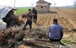 晉南43歲農民靠賣香椿芽發了財,今年又育3萬棵苗,看他忙成啥?