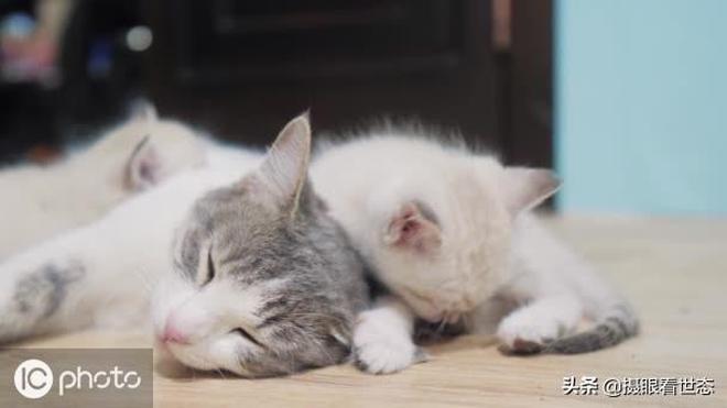 主人拍下貓媽媽照顧貓寶寶的照片,網友被萌化紛紛表示超有愛
