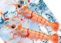 來自南極和新西蘭之間的純淨深海——南極深海螯蝦
