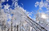 風景圖集:雪樹的天空