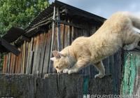 你是鏟屎官嗎?快來學習貓咪的日常環境管理和衛生的維護要點