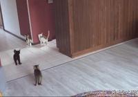 鏟屎官養了14只小貓,每到飯點時令她很煩惱,她的褲子又要遭殃了