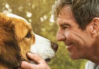單日票房持續領跑,《一條狗的使命2》:愛讓人變成更好的自己