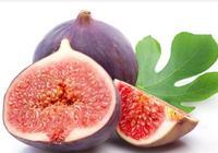 無花果好吃營養高,無花果有什麼功效和作用,吃無花果有哪些禁忌