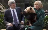 國外領導人對熊貓的痴漢心,西班牙王太后一手抱一個,簡直萌化了