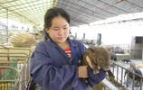 35歲農家女山上撿到一隻小野豬 回家飼養馴化後給她帶來大產業
