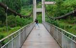 資中縣蘇家灣濛溪口村,村民修房挖出多年老葛根,吊橋方便人出行