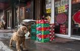狗狗和主人討零用錢買零食,零錢不夠還賣萌賺外快