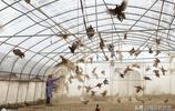 養孔雀養鴕鳥養野雞,這個村子的村民建起動物世界,靠這個來致富