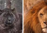 這5種最神奇的混血動物 有一種世界上只有兩隻