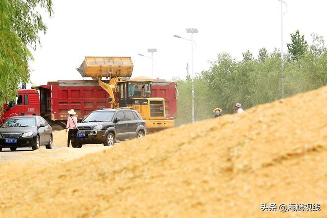 滑縣小麥收割進入高潮,小麥豐收了,百姓對小麥價格有這樣的期盼