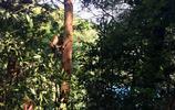 森林裡面看猴子,這才是猴子的本性,一群具有野性的猴子