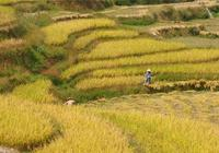 土地承包期延長至2057年,農村新增人口如何獲得土地?