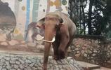 女兒動物園留下的照片,動物們知道了估計要生氣了