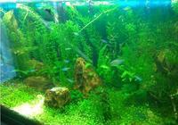 魚缸長期不洗易長綠藻,老魚匠教你6招快速清除,讓魚缸乾淨如初