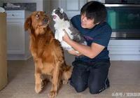 自從家裡新來了只喵,網友說他家狗每天都是這副表情……