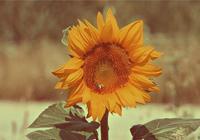 人生醒悟良言:別等失去了緣分,才知道一個轉身就是永遠