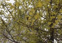 《春雨陰山》 古體詩