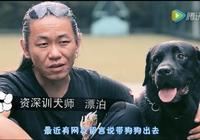 狗狗出門,聞吃地上的東西怎麼辦?專業訓犬師是這麼訓練的