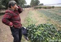 農民辛苦?你連農民也當不起了,未來80%農民會被幹掉!不信?