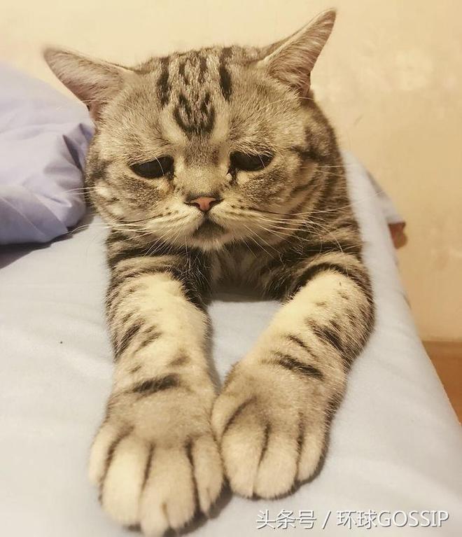 世界上最憂鬱的貓?其實人家這神情是有原因的,鏟屎官思想有深度