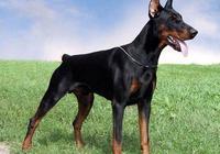 家庭養犬常備藥及對應的症狀(個人整理,建議收藏)