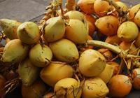 金椰子是鍍了金的椰子嗎?能吃嗎?