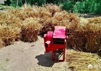 現在麥子已經收了,在農村裡面大家是用什麼方法打麥子的,有哪些農村打麥的記憶呢?