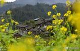 高鐵通了,到貴州榕江看春花還遠嗎?去感受都柳江的風情。要快!