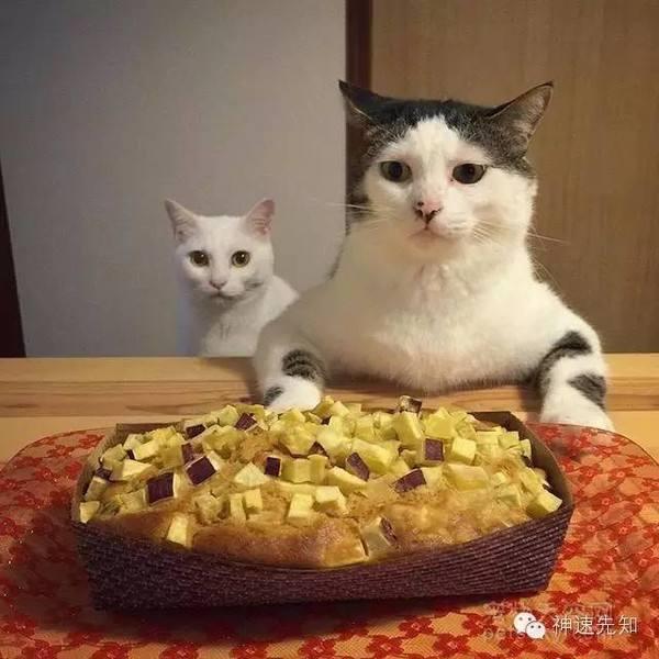 養貓給我們帶來的這些變化,你是不是也有同感?