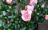 跑斷腿都找不到這幾款好養又四季開花的花苗,讓你的花園陣陣花香