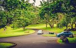 旅行日記 遊新西蘭奧克蘭 獨樹山一點也不孤獨