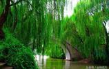 青春裡的江直樹 你知道湘琴鐘愛到底哪棵樹嗎?