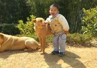 農民的心聲:年年養狗年年無,養不大一隻狗,中華田園犬面臨危險
