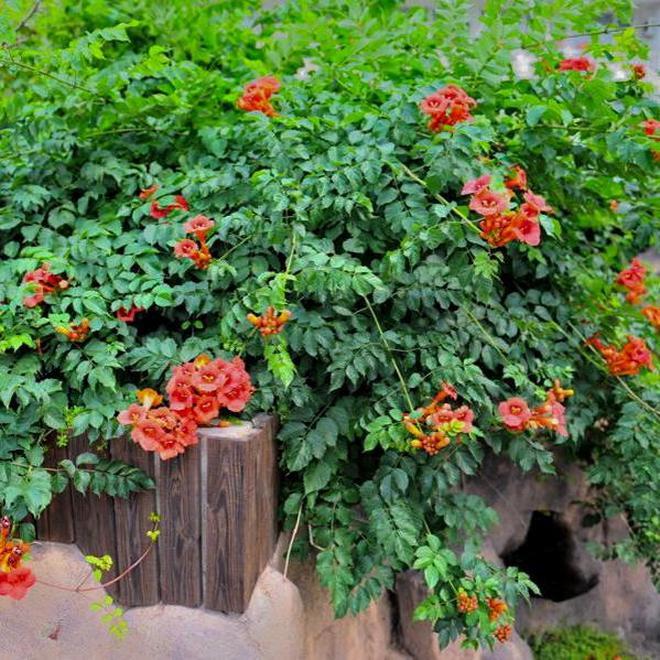 這些爬藤花卉好看又容易養活,輕鬆就養爆成瀑布,可惜知道得太晚