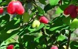 家中如果有閒置地方,快種上這6款樹苗,從此園中不單調花香四溢