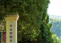 南京東郊,我捕捉到了絕美夏天