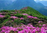 人間四月天 , 來江西賞杜鵑花, 你肯定會愛上這個地方!