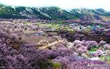 三月最美花海全攻略,油菜、杏花、櫻花、桃花……就來這裡