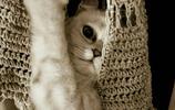 """可愛到炸裂的貓咪,她鏡頭裡這些魔性十足的""""表情包"""""""