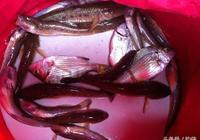 釣魚技巧:驅小魚有奇招,快來看看