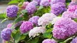 比香水還香的植物,種在院子裡,真是滿園飄香,尤其第一個
