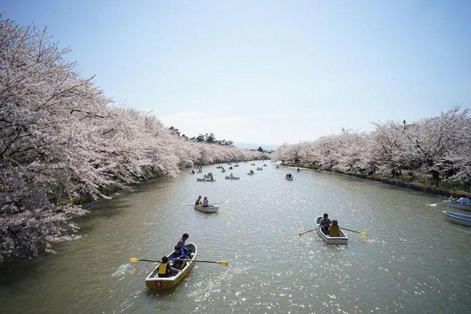 《國家地理》雜誌拍攝了17張日本櫻花的神奇照片