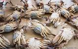 要說吃梭子蟹只服浙江人,這麼重口味的吃法,一般人接受不了